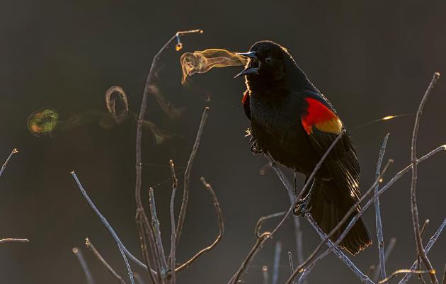 The 2019 Audubon Photography Awards: Winners
