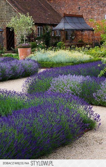 Lavendel auf kiesbeeten toll f r sonnige vorg rten - Balkongarten anlegen ...