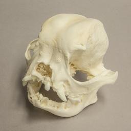 Oklahoma City Ok Dog Skull Skull French Bulldog
