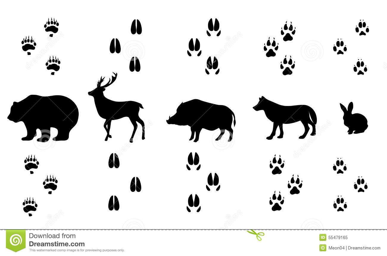 Afbeeldingsresultaat Voor Sporen Wild Zwijn