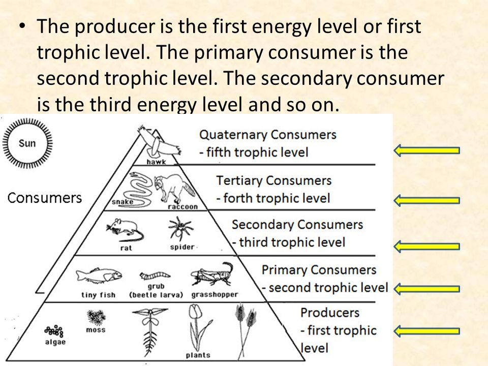 Image result for trophic level   Trophic level