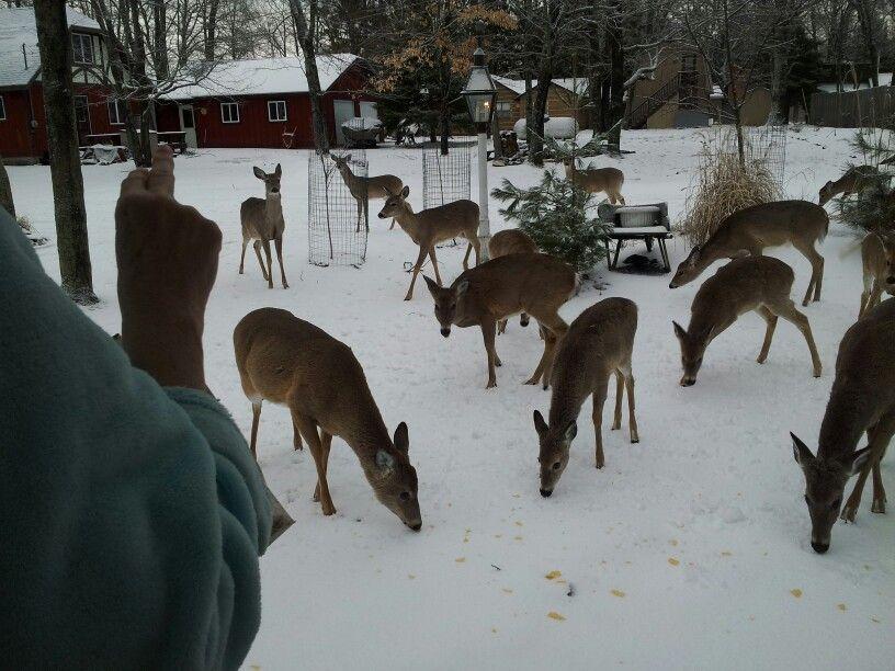 No power at Christmas Moose art, Grand lake, Deer