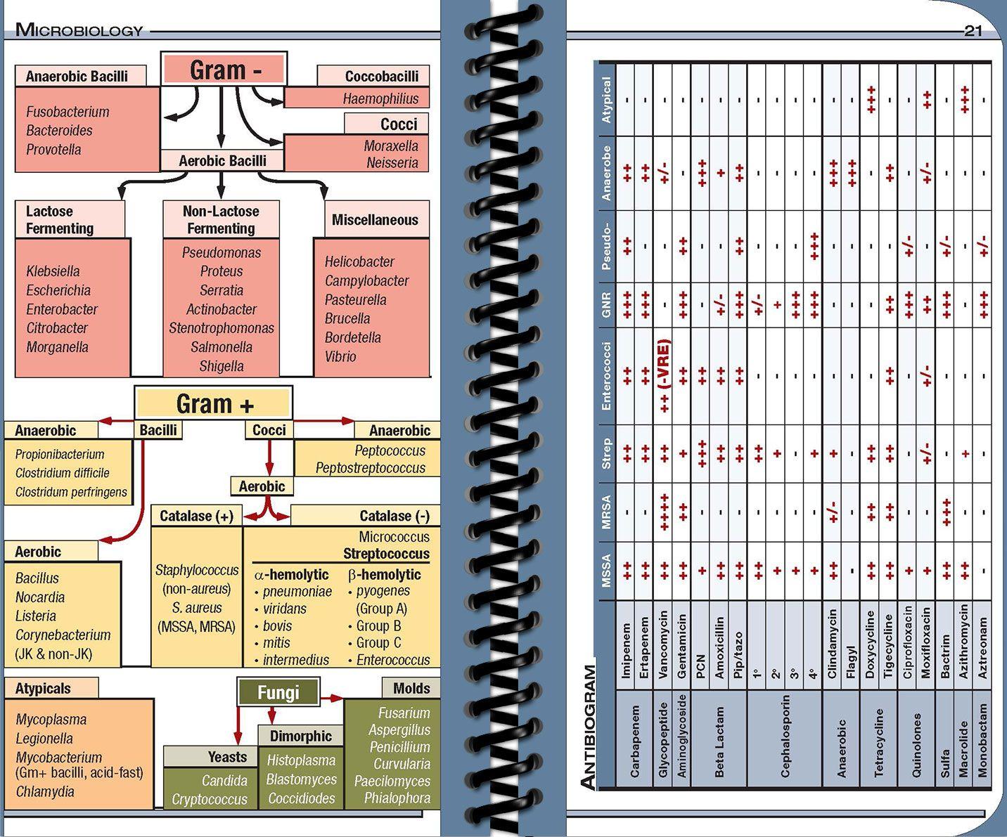 NPpocket Medical Reference Guide Nursing Edition Nurse
