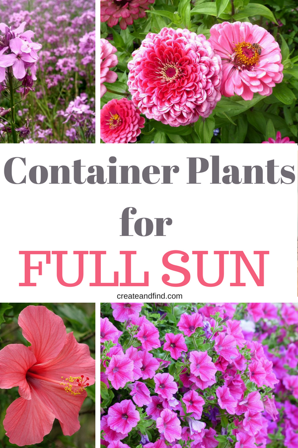 Container Plants For Full Sun Container Plants Plants 400 x 300