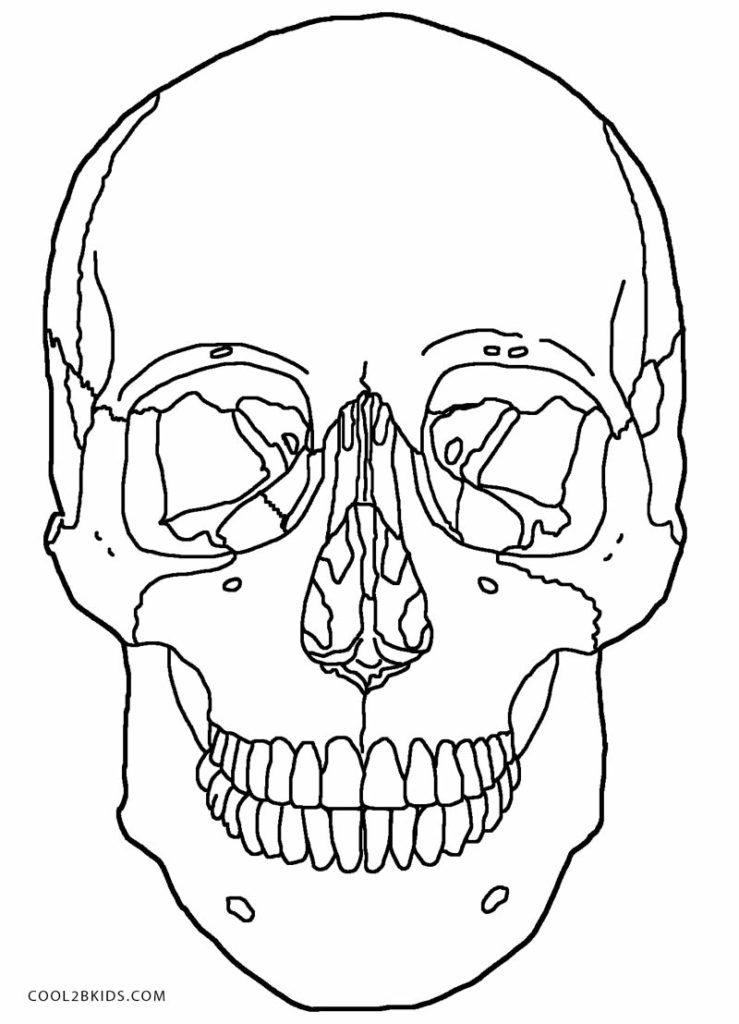 Skull Anatomy Coloring Pages Skull Anatomy Coloring Pages skull ...