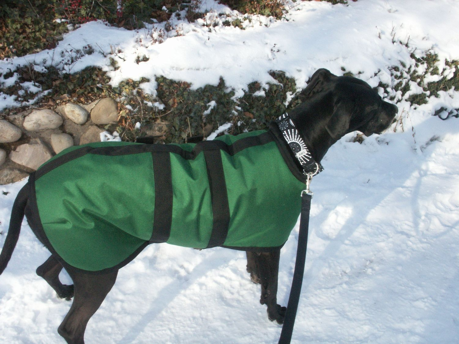 Great Dane Winter Dog Coat Size 35 Custom Made For By Cozyhorse