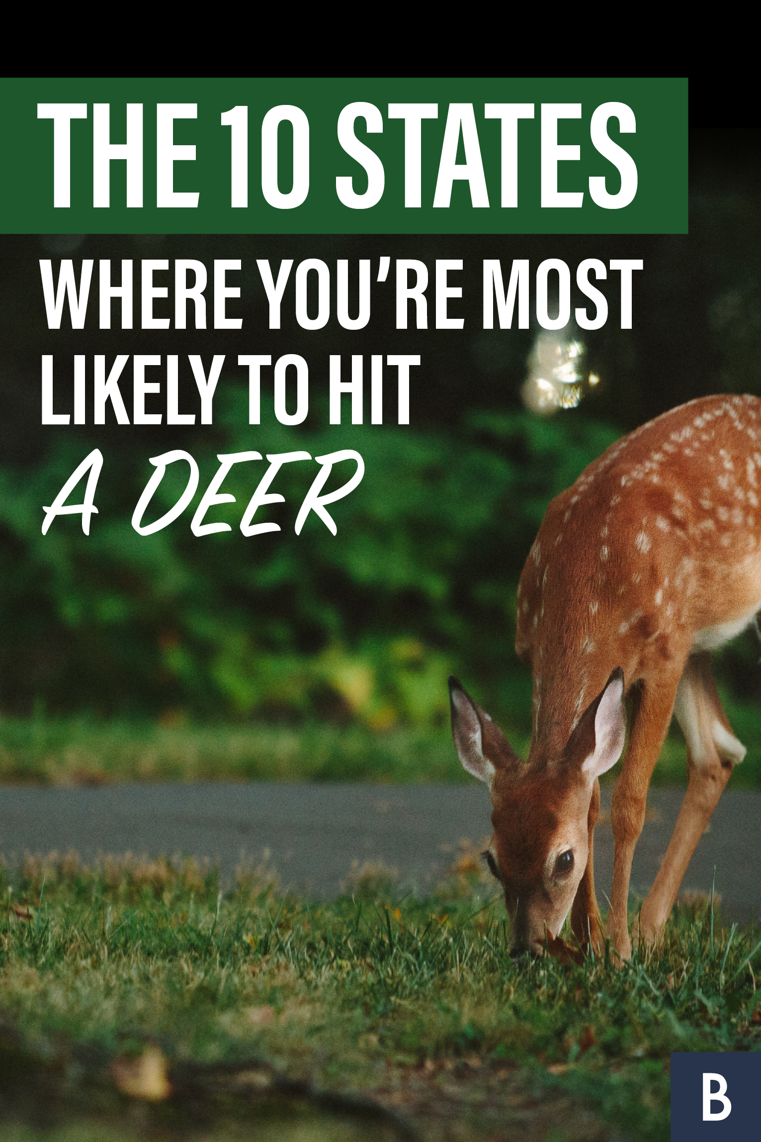 Antler Alert See If You Live In One Of The 10 States With A High Rate For Collisions With Deer Photo Credit Vladimir Kudinov Unsp Car Loans Auto Loan Rates