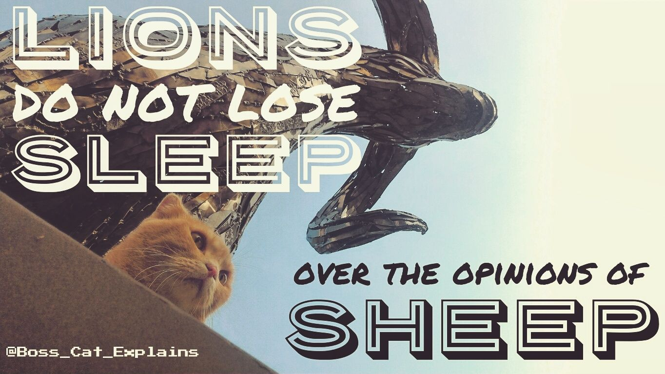 Statue Quotes Boss Cat Quotes  Cute Cats And Motivational Quotes  Pinterest .