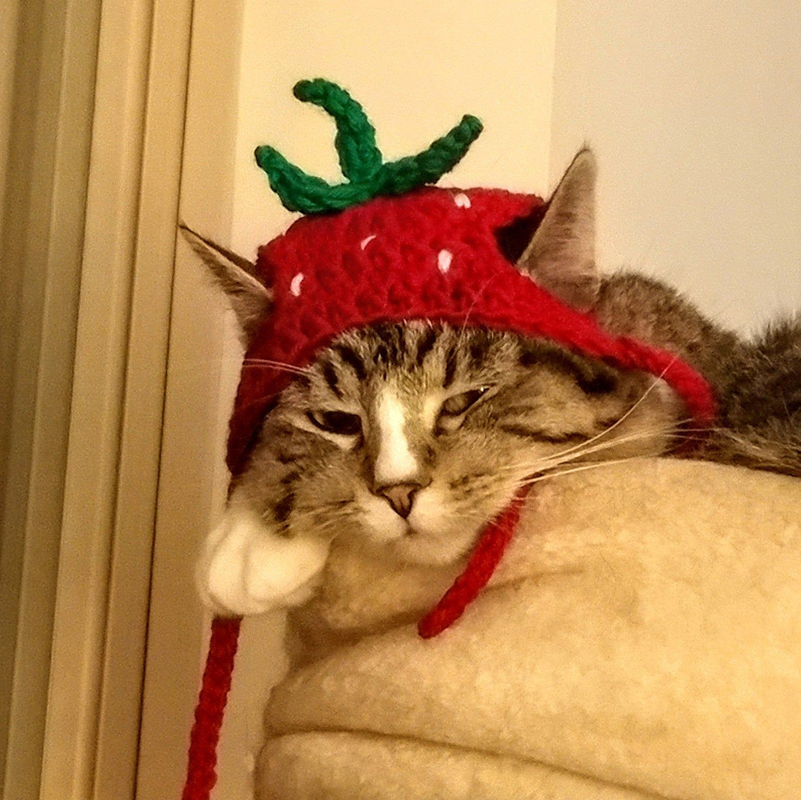 Pattern Only Strawberry Cat Dog Hat Crochet Beginner Pet Etsy In 2021 Cat Hat Pattern Crochet Dog Hat Crochet Dog