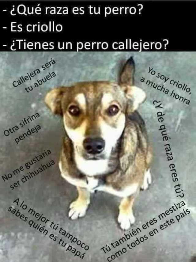 Pin De Wendy Teran En Lo Mejor Del Mundo Perros Frases Memes Perros Chistes De Perros