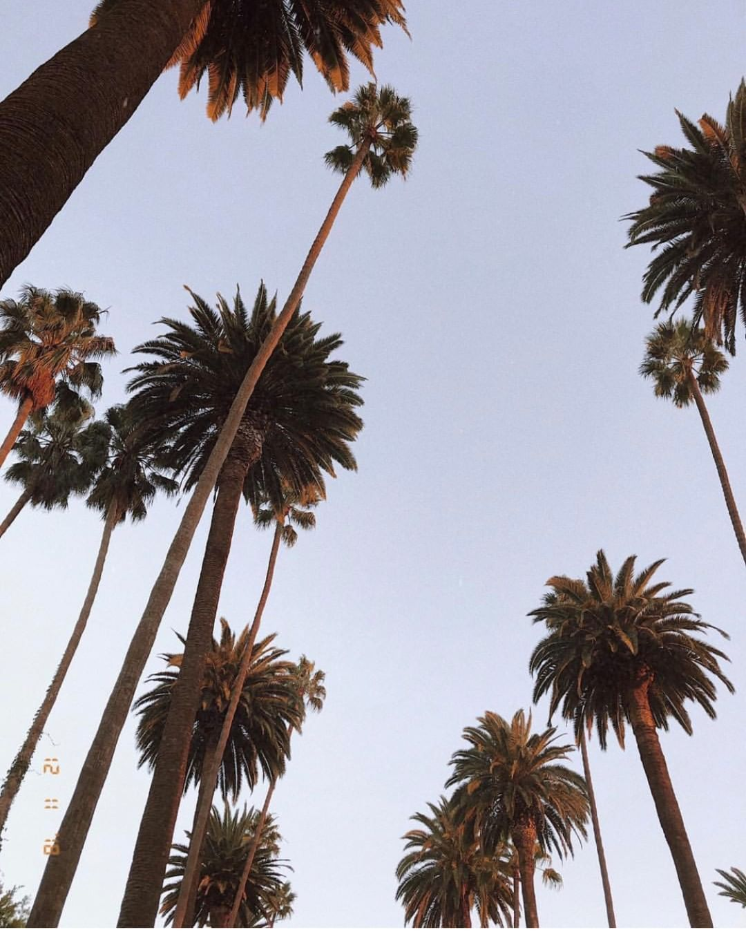 palm trees california aesthetic west coast blue on wall street journal online id=50090