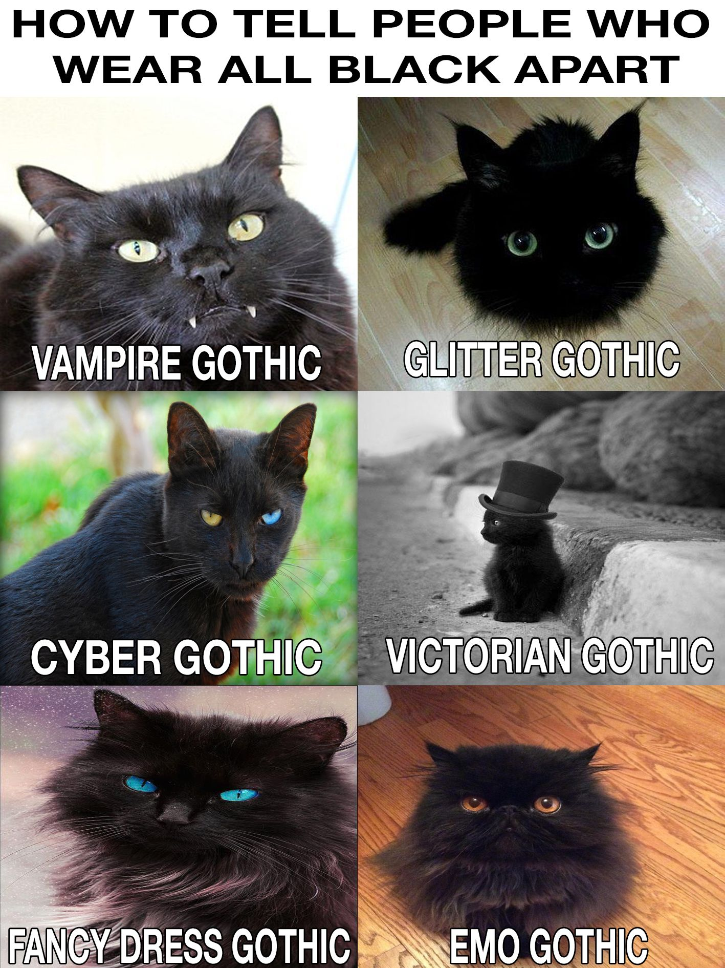 Black cats; come visiting my board to meet much more! You