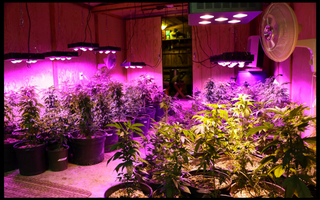 Plant Grow Light For Indoor Crxsunny Led 1000w Review Can Provide