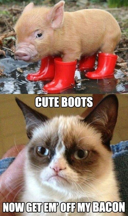 Grumpy cat, pig, bacon, boots, animal, cat, meme