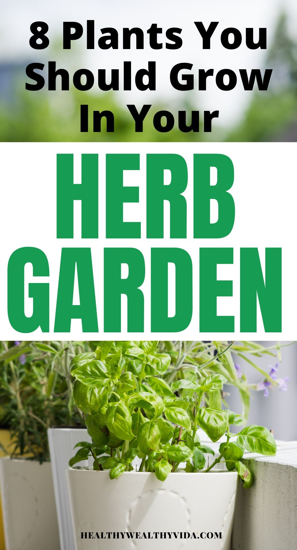 8 Plants You Should Grow In Your Outdoor Herb Garden