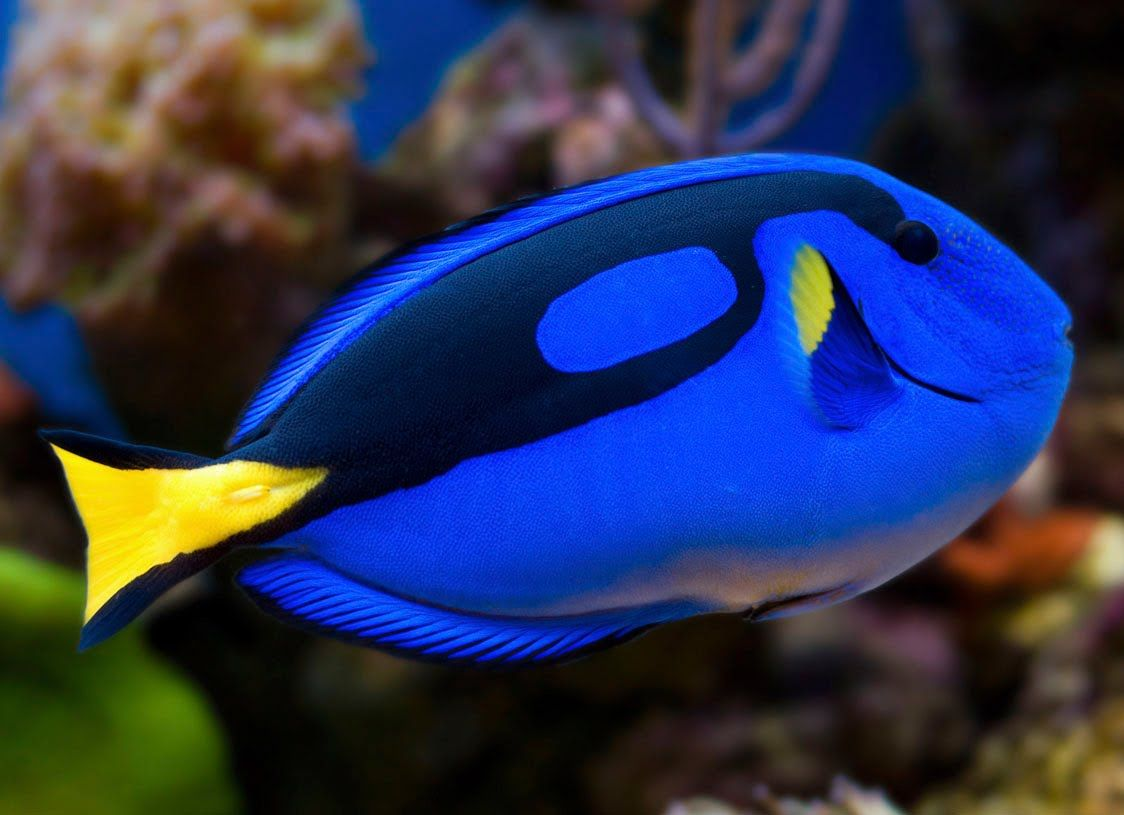 Top 10 most beautiful fish in the Word   Top Surprise