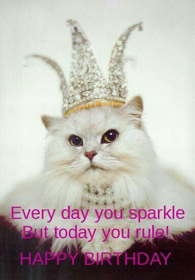 Happy Birthday Crazy Cats Cats I Love Cats