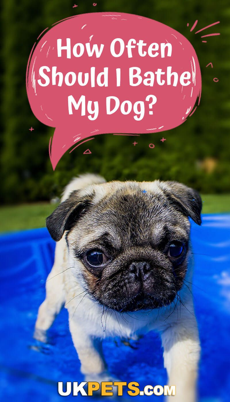 How Often Should I Bathe My Dog Top Articles On Dogs And