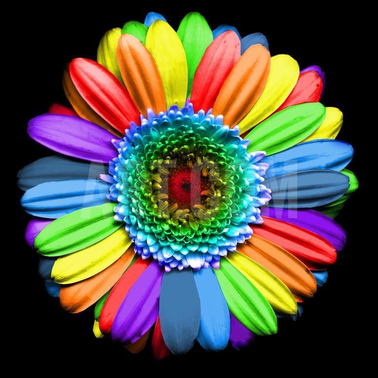 Rainbow Flower Photographic Print By Magda Indigo At Art Com