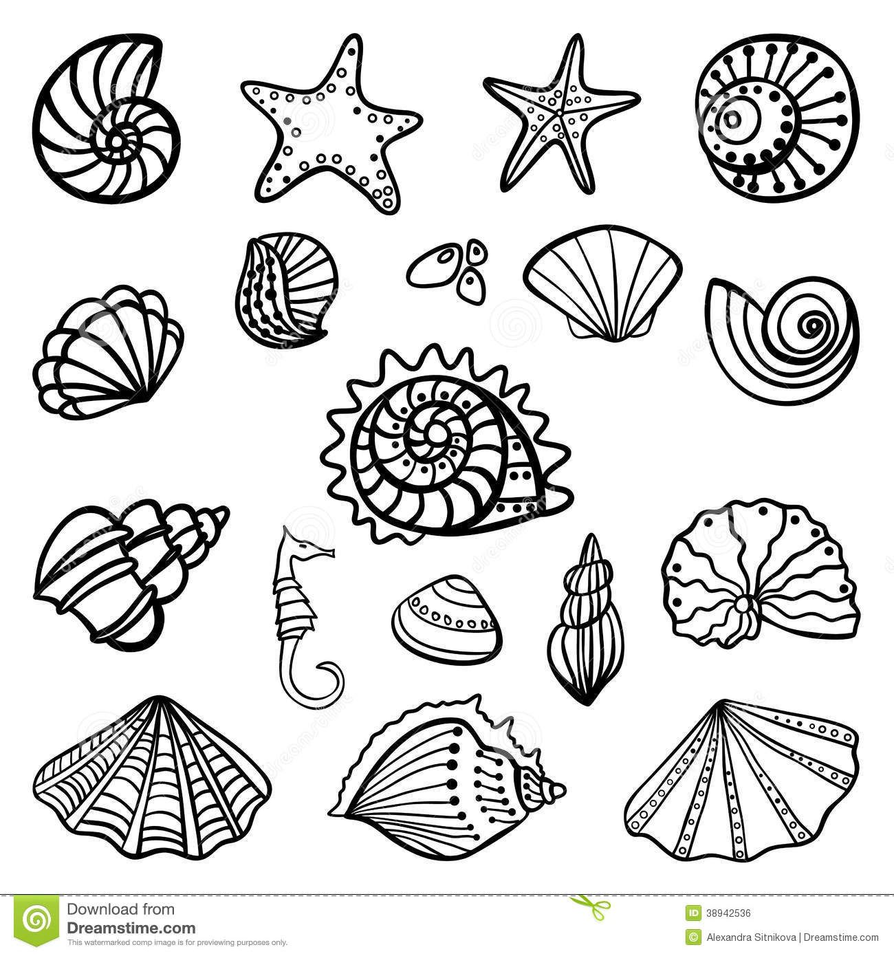 Set Seashells White Background Vector Illustration 38942536 Jpg 1300 1390 Sea Drawing Coloring Pages Coloring Books