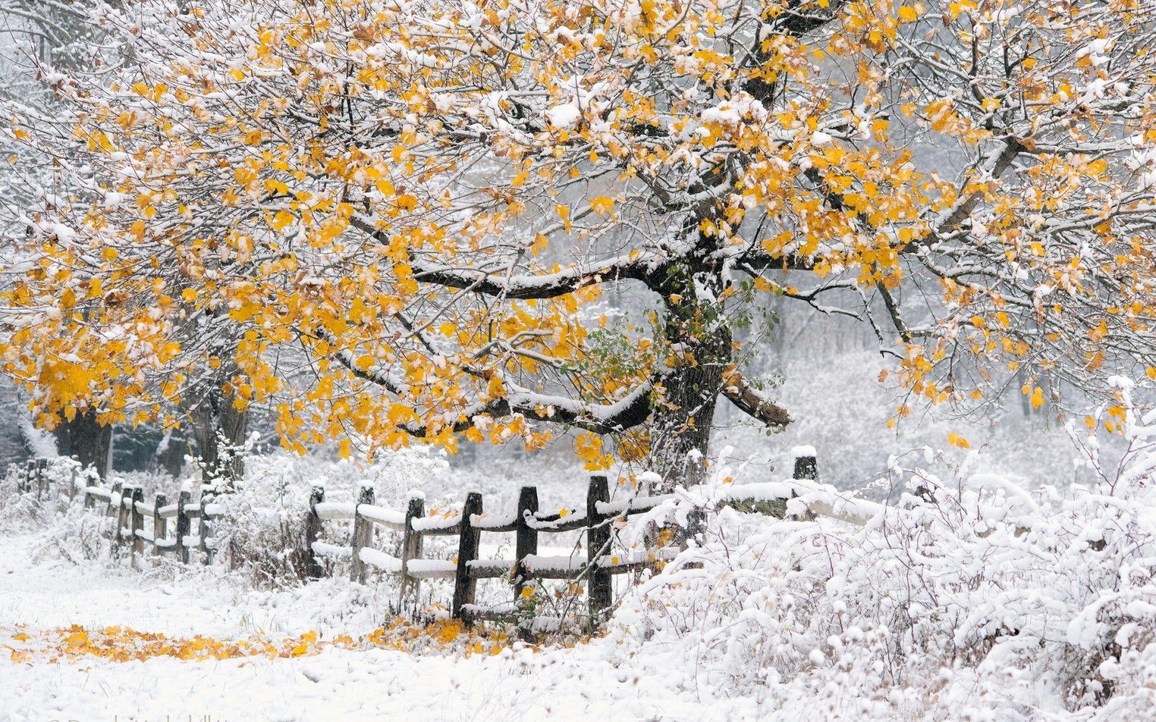 Картинки зимняя осень