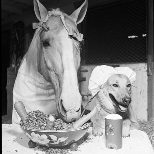 "The first Mr. Ed (aka ""Bamboo Harvester"") and unnamed friend, 1964 (via corbis)"