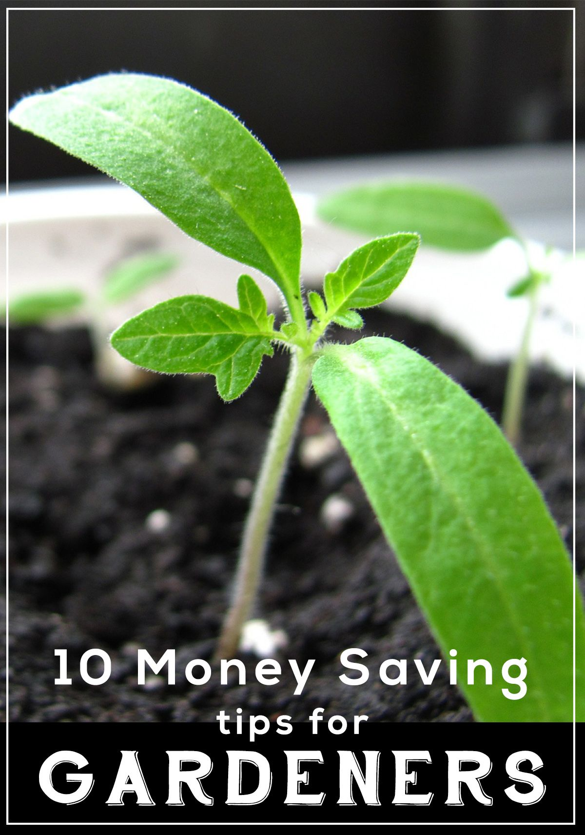 10 Money Saving Tips For Gardeners How Does Our Garden