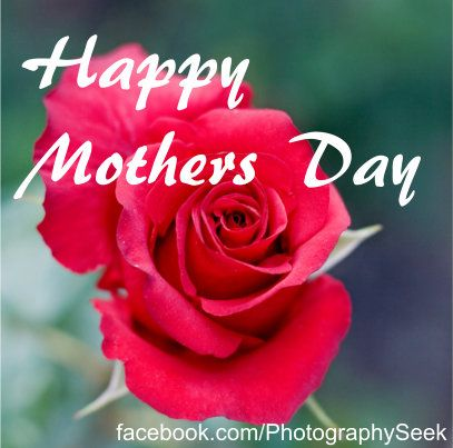 Happy Mothers Day Rose Raindrops And Roses Beautiful Flowers