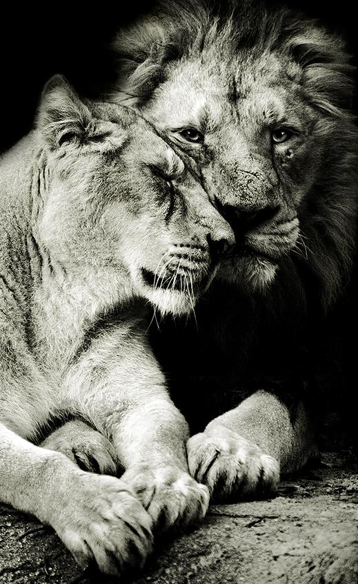 Пара милых животных