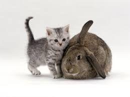 Гороскоп на 2017 год для кота и кролика