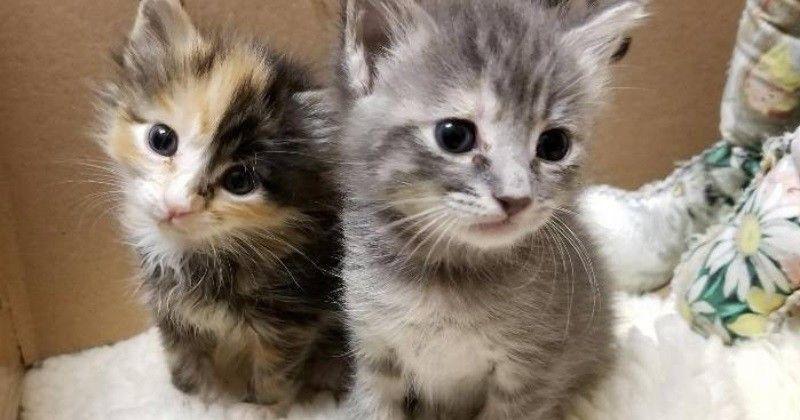2 sœurs deviennent amies avec un tout petit chat pour qu'il ne soit pas seul