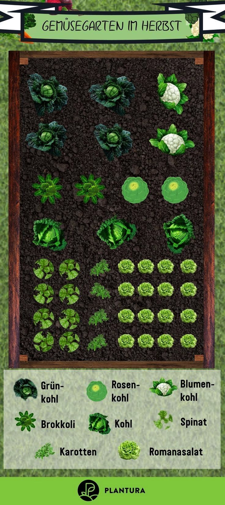 raised beds in autumn  Plantura  Vegetable garden in autumn summer is over and you still want to harvest delicious vegetables from Planting raised beds in autumn  Plantur...