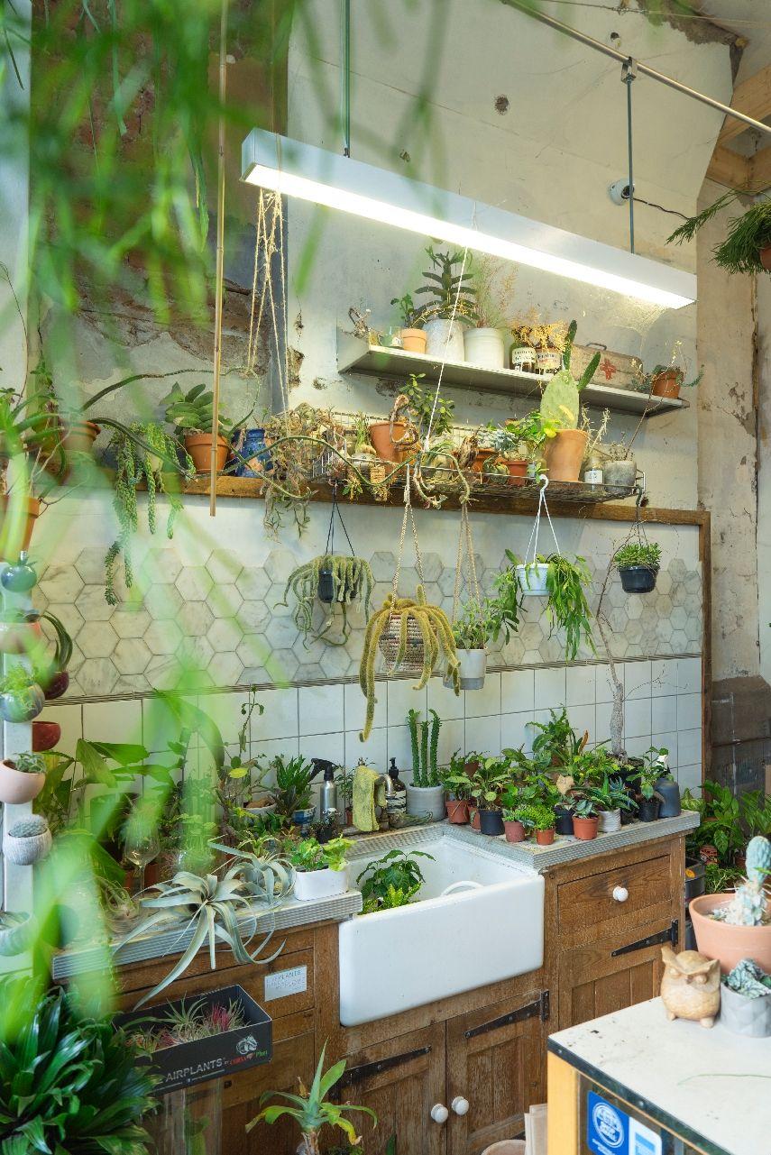 db969db28b Urban Jungle Bloggers - Conservatory Archives in London   urbanjunglebloggers Plantas De Interior