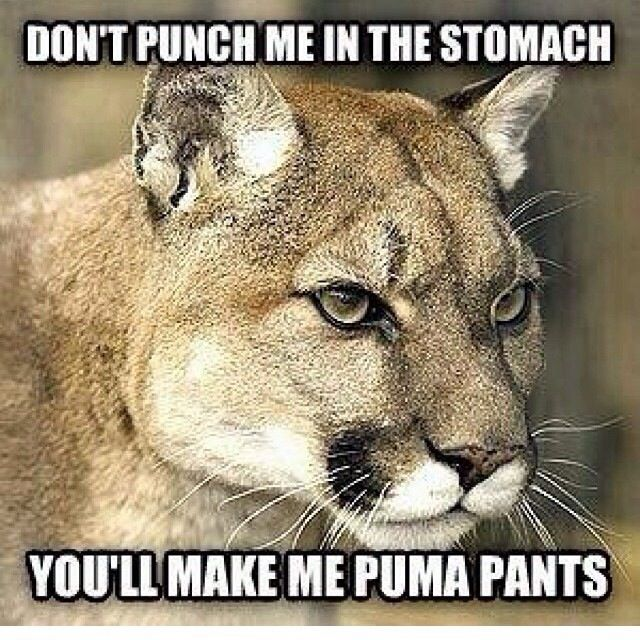 funny puma pictures