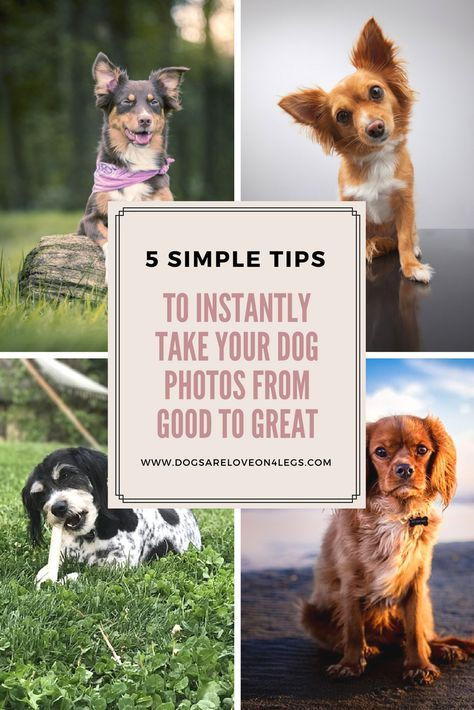 5 Simple Tips To Instantly Take Your Dog Photos From Good To Great - Dogs Are Love On 4 Legs