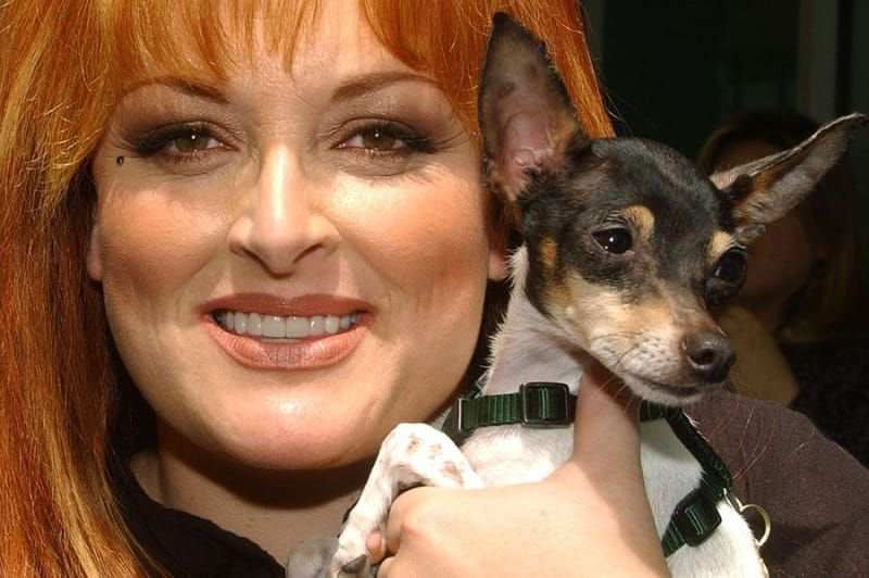 13 Celebs And Their Adorable Adopted Pups Dogs, Pup