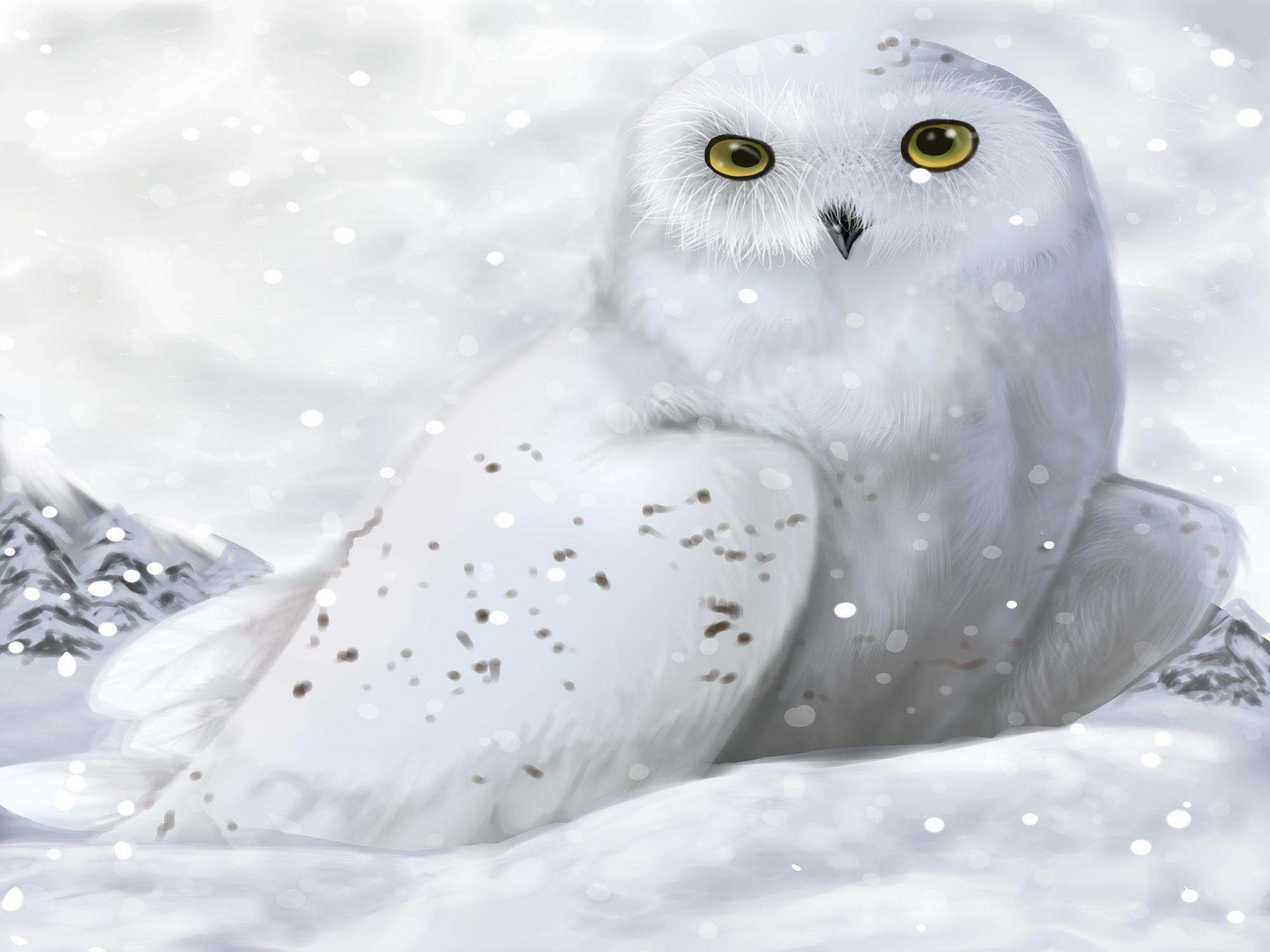 White Winter Owl Wallpapers HD Wallpapers