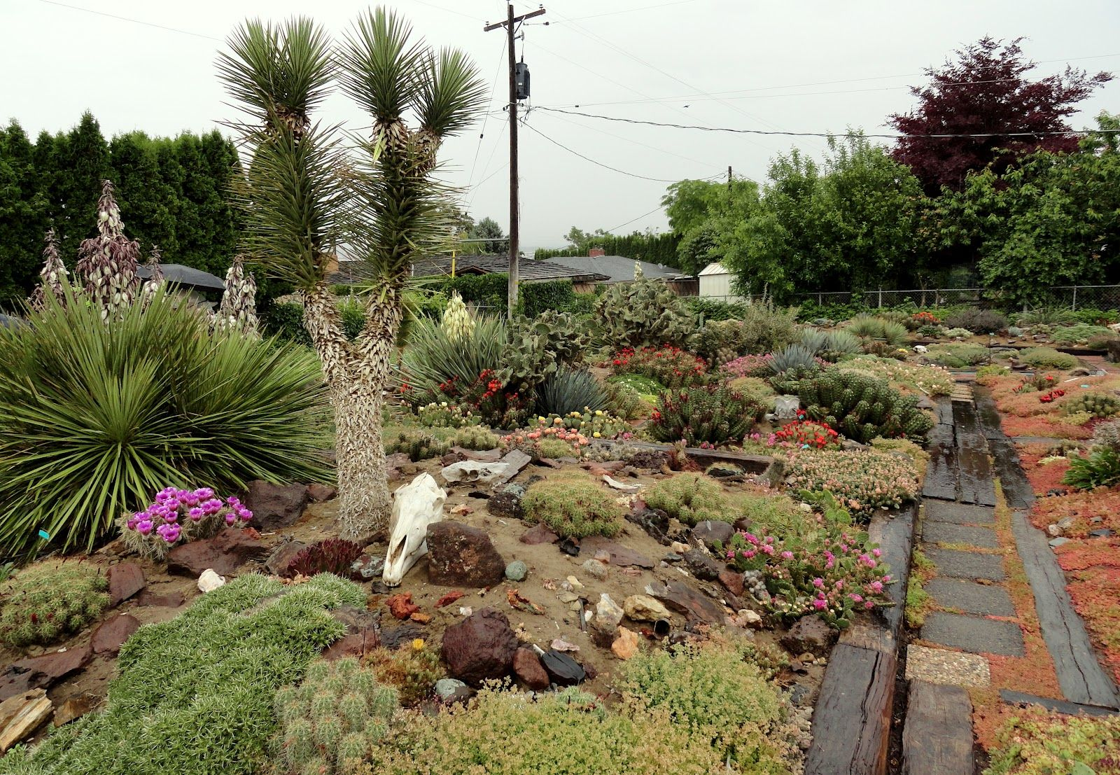 desert garden design | ... ? Well so I could visit Hillside Desert ...
