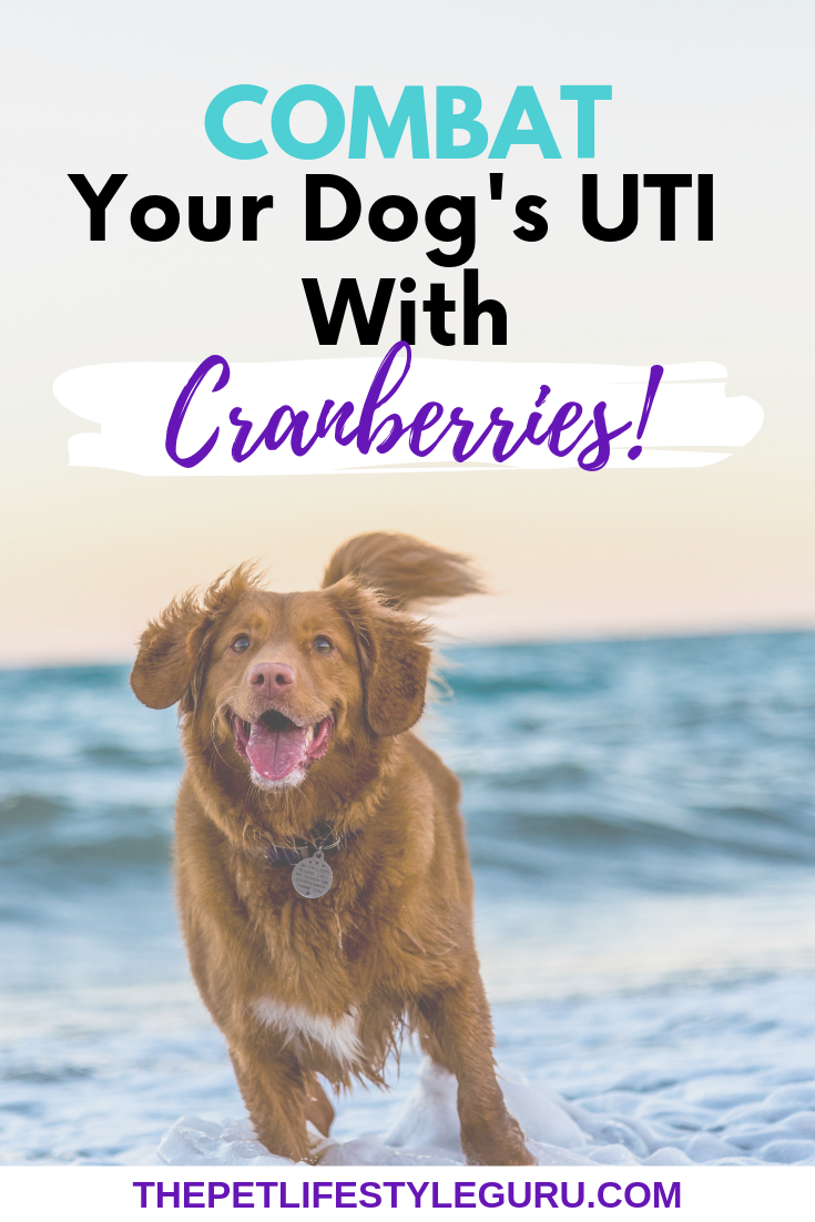 Cranberry Cookie Treats Recipe With Images Dog Uti Dogs Dog Care