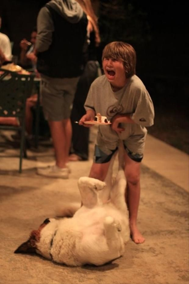 Perfectly Timed Picture Of Dog Kicking Boy In The Nuts