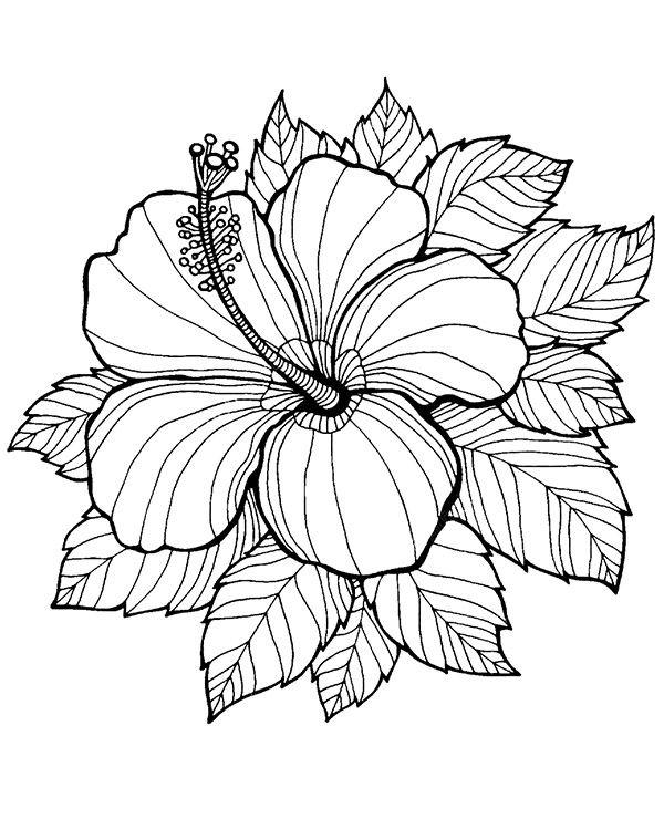 Kolorowanka Malowanka Dla Doroslych Kwiat Flower Coloring Pages Mandala Coloring Pages Coloring Pages