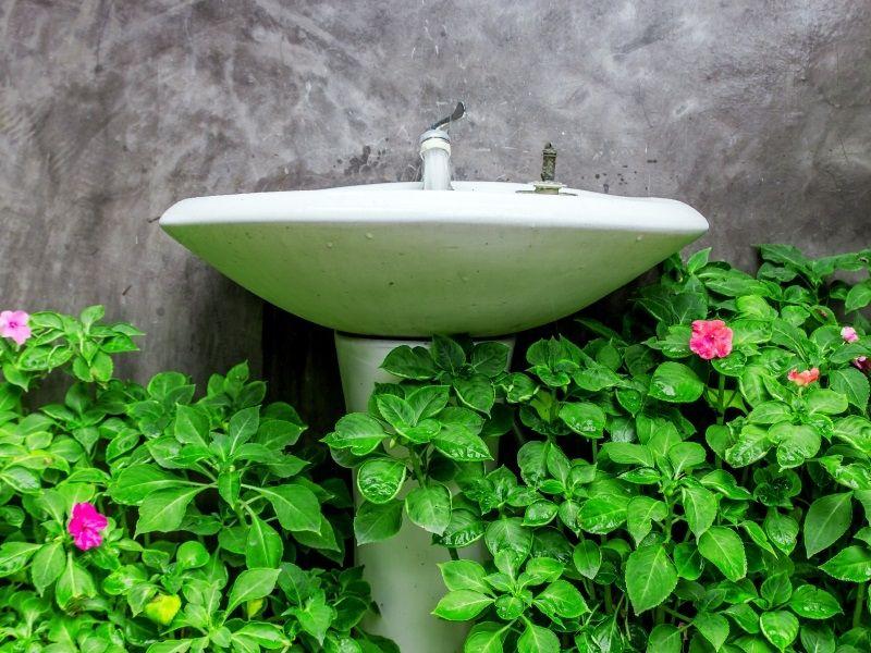 Badezimmer Pflanzen ~ Besten es grünt so grün diese pflanzen passen in ihr bad