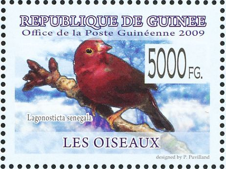 Red-billed Firefinch stamps - mainly images - gallery format