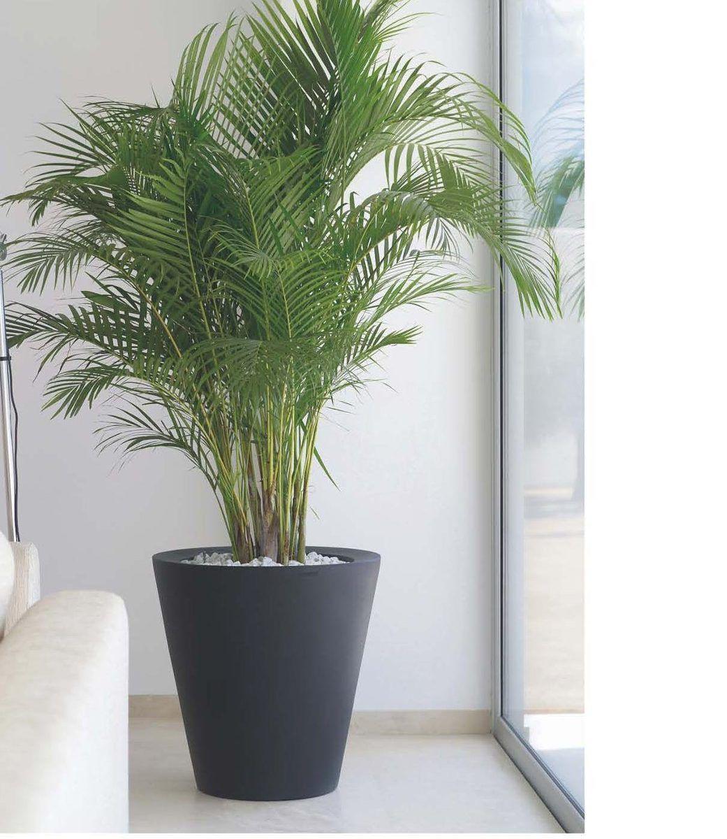 Pin by hernan menendez on plantas corner plant plants - Macetas para interiores ...