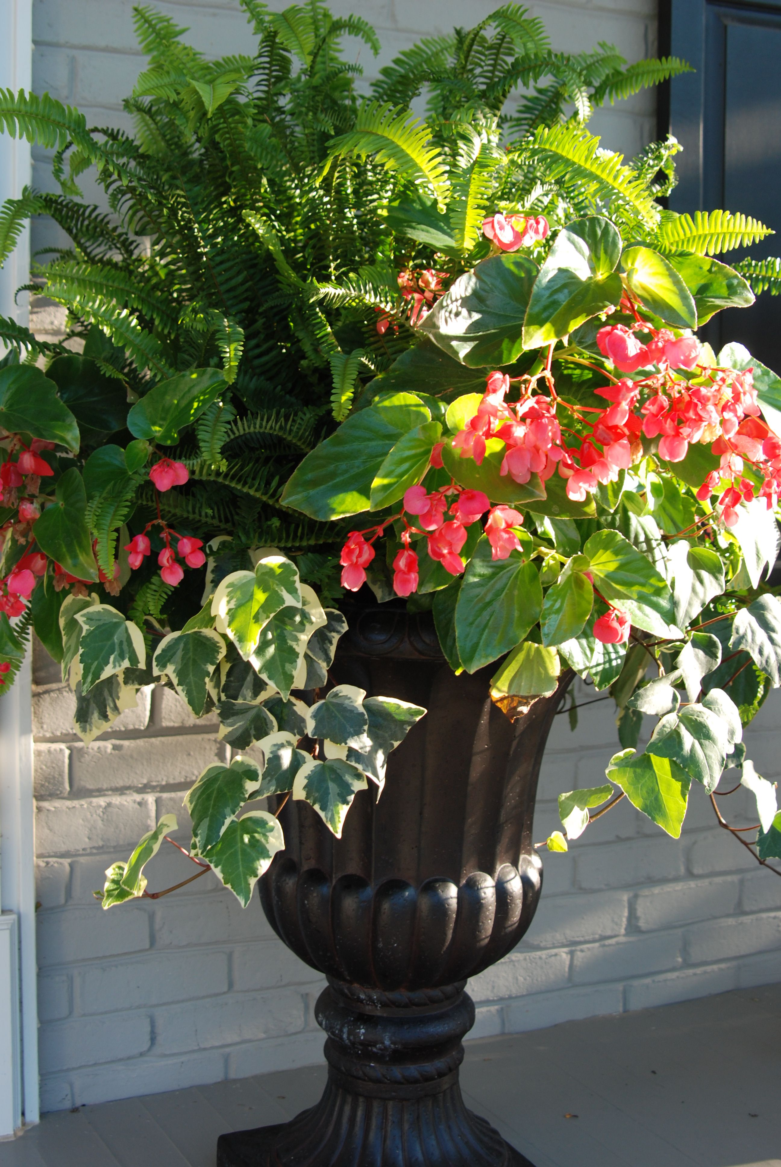 Kimberly Fern Dragon Wing Begonias And Algerian Ivy Container Flowers Container Gardening Summer Planter