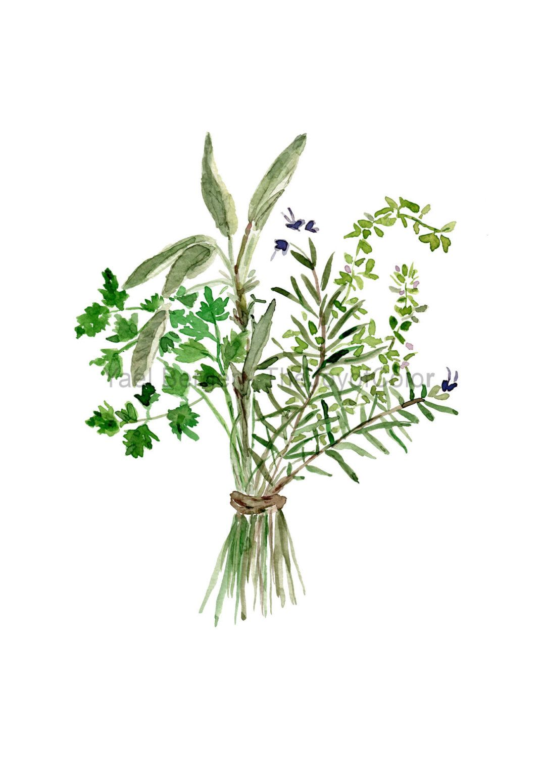 Herbs Bouquet Print Kitchen Art Botanical By Thejoyofcolor