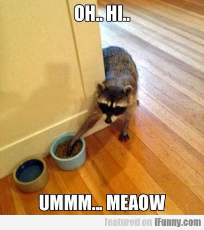 Lmao! That's exactly what Roger does! (Yes, I'm animal crazy. I named one of our wild raccoons)
