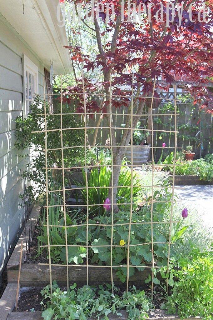 How to Make a DIY Bamboo Trellis Bamboo trellis, Gardens and
