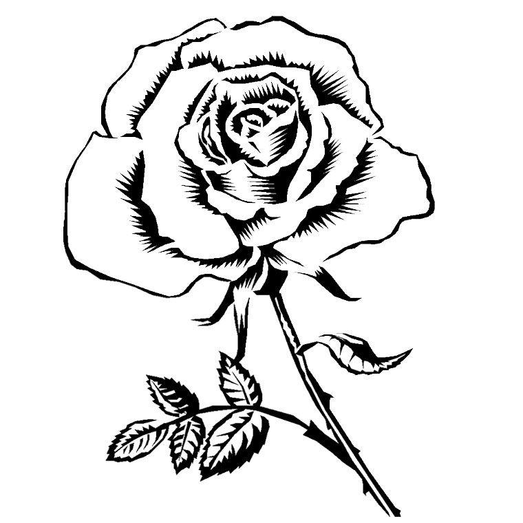 Stencil Dessin Gratuit Coloriage Fleur Coloriage Rose
