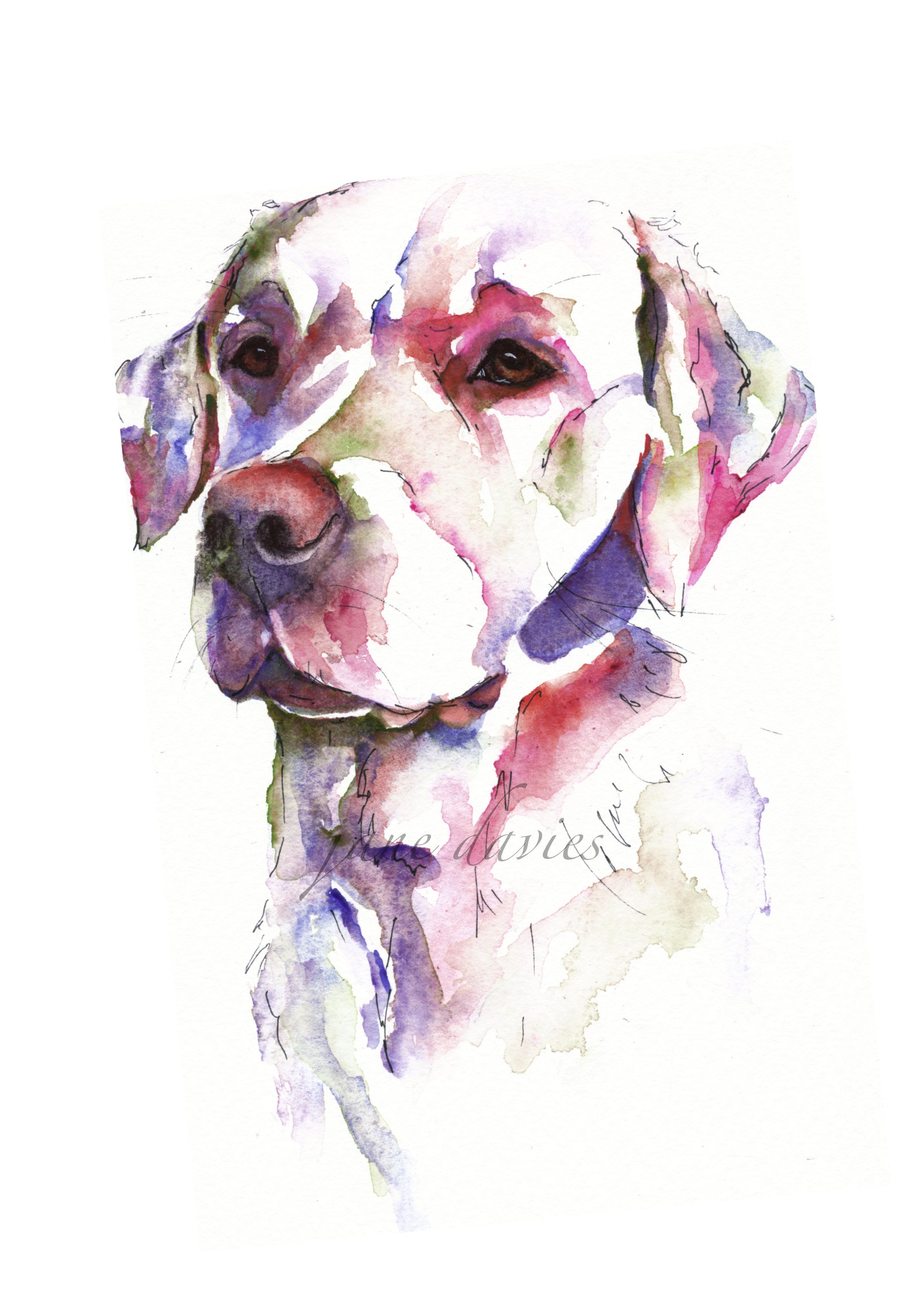 Ladrador Painted By Watercolour Artist Jane Davies Dog Paintings